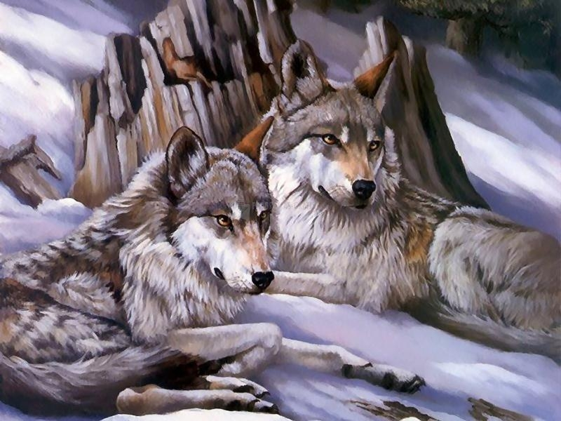 Pantallazo Lobos en Invierno