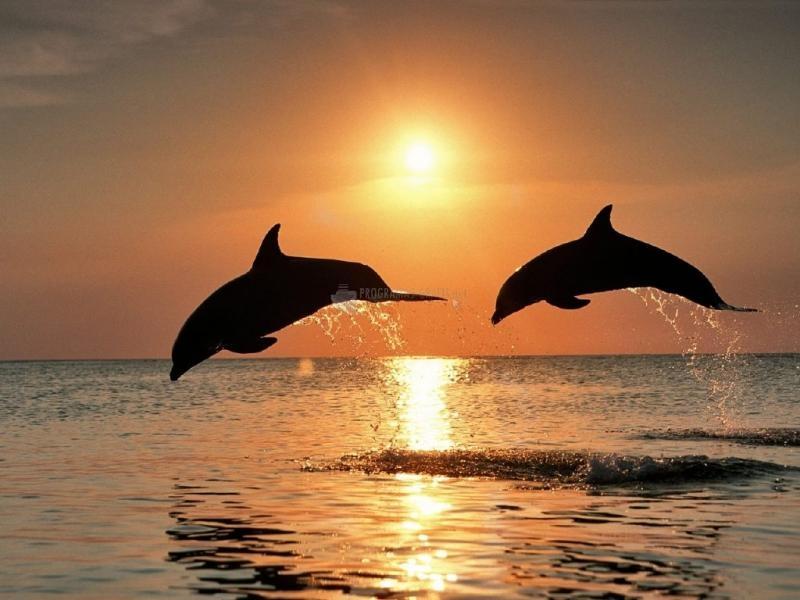 Pantallazo Delfines en el atardecer