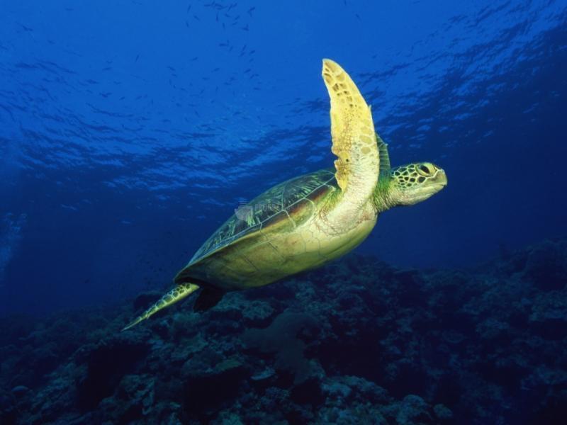 Pantallazo Tortuga de mar
