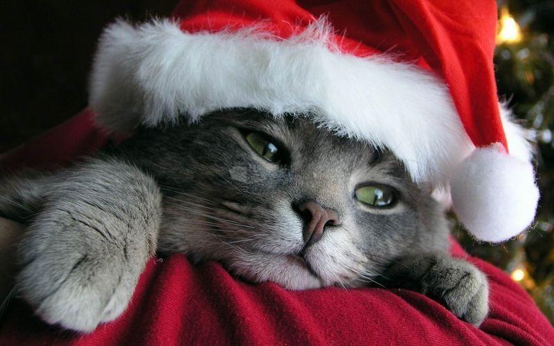 Pantallazo Gato Navidad