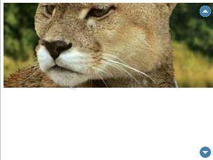 Pantallazo Tigra Scroller