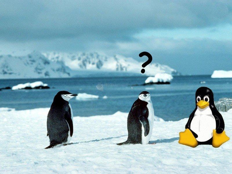 Pantallazo Confused Penguin