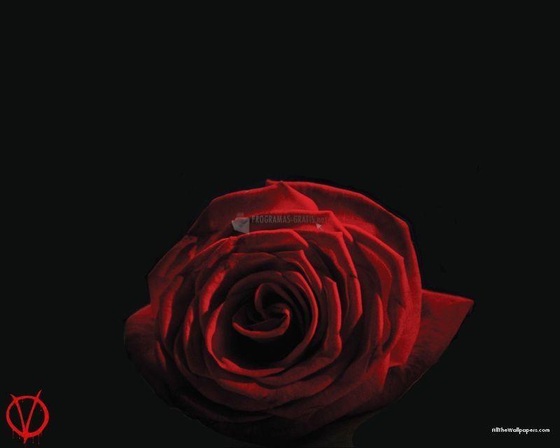Pantallazo Rosa roja