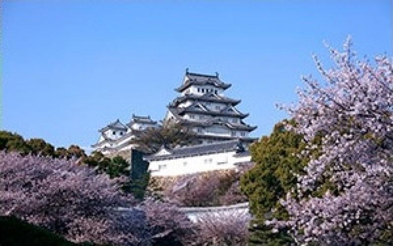 Pantallazo Flores cerezos japoneses
