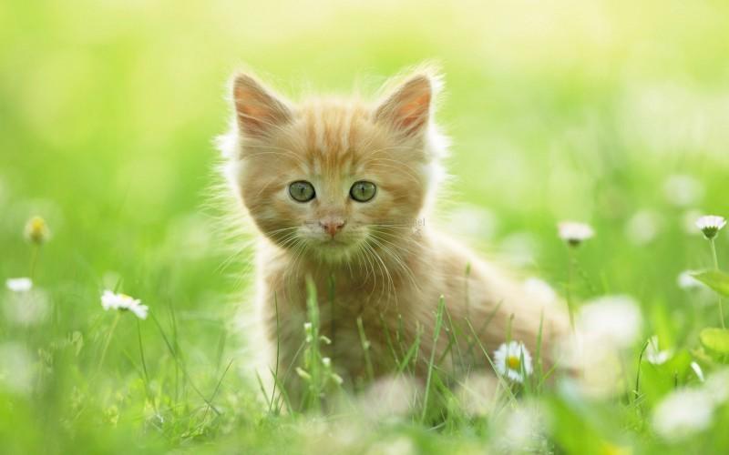 Pantallazo Joven gatito