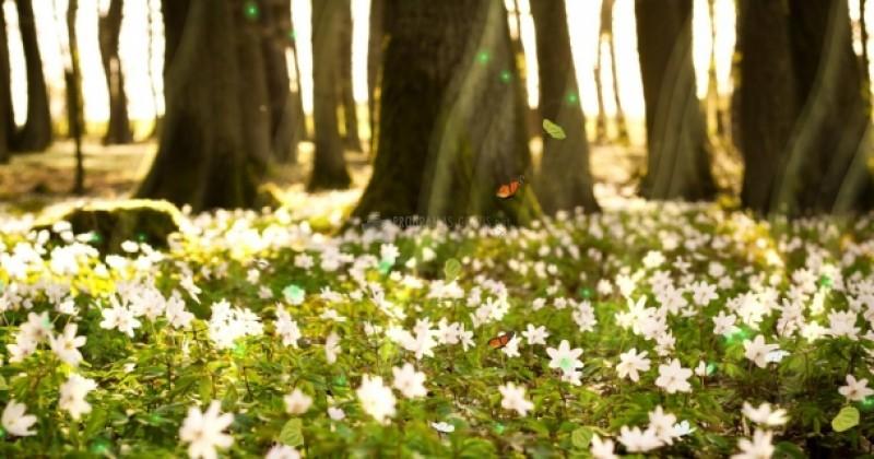 Pantallazo Flower Dawn