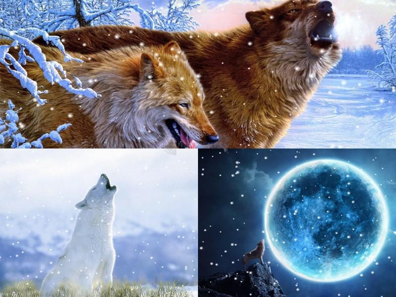 Pantallazo Howling Wolves Animated Wallpaper