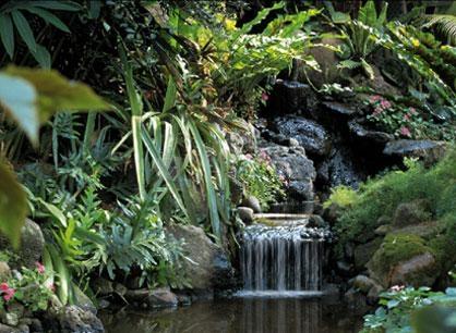 Pantallazo Free Living Waterfall