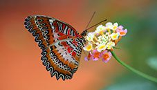 Pantallazo Butterflies Theme