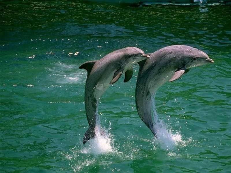 Fotos de delfines para descargar gratis 88