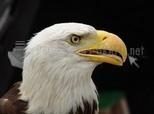 Pantallazo Eagles
