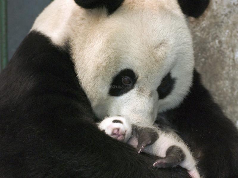 Pantallazo Pandas