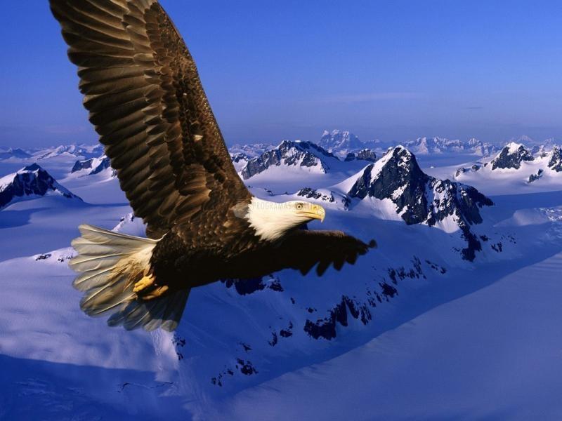 Pantallazo El Vuelo del Aguila