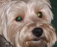 Foto Pet Eye Pilot