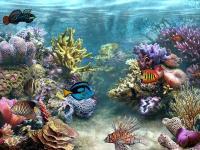 Captura Sim Aquarium Free Tank