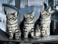 Pantallazo Tres gatitos