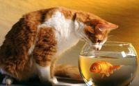 Foto Cats Theme